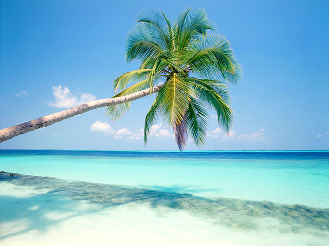Coconut-Tree-with-Sea-View