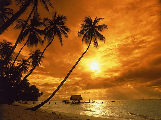 Palm-Trees-at-Orange-Sunset