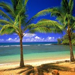 Tropical-Beach-with-Palm-Trees