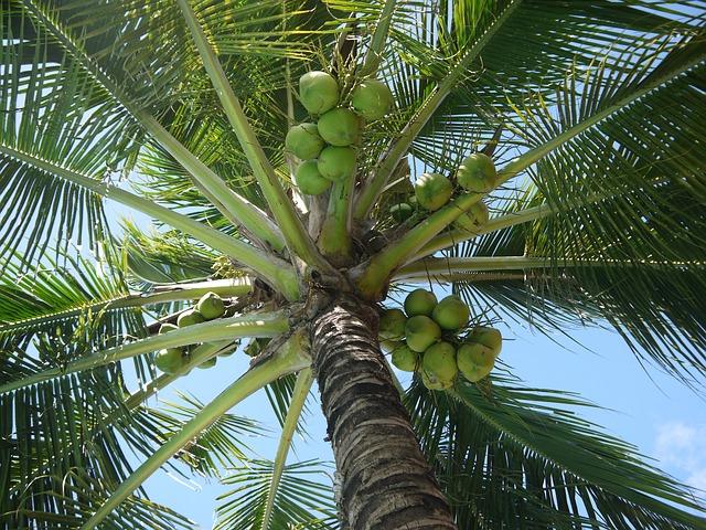 coconut-322424_640