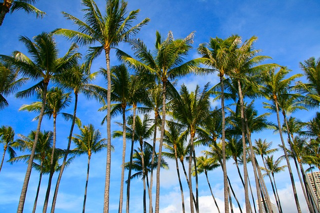 palms-555060_640